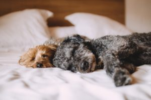 benefits to sleeping with your dog