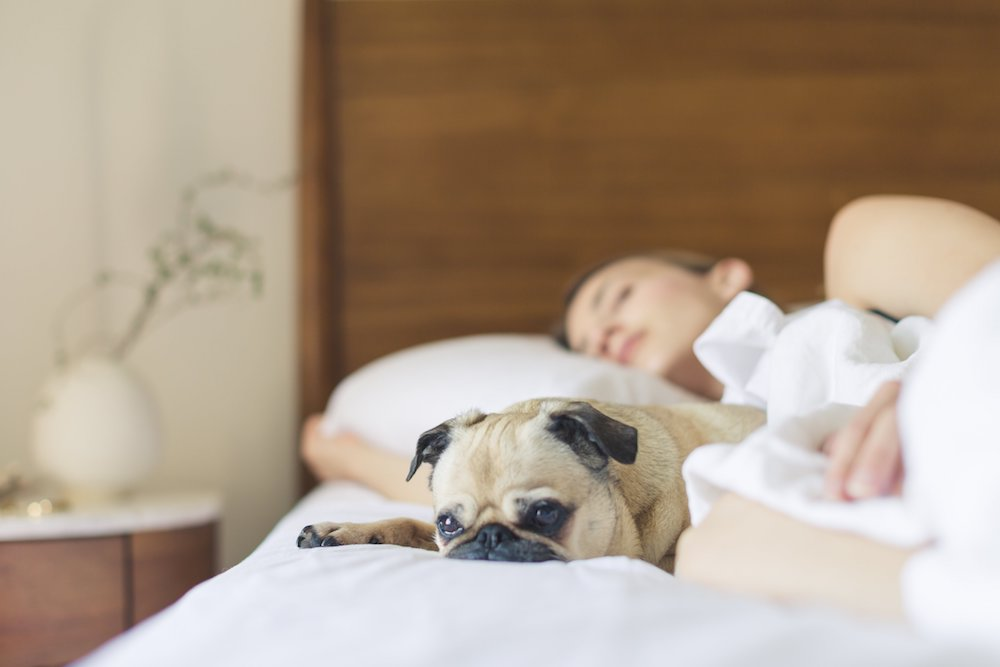 benefits to sleeping with you dog
